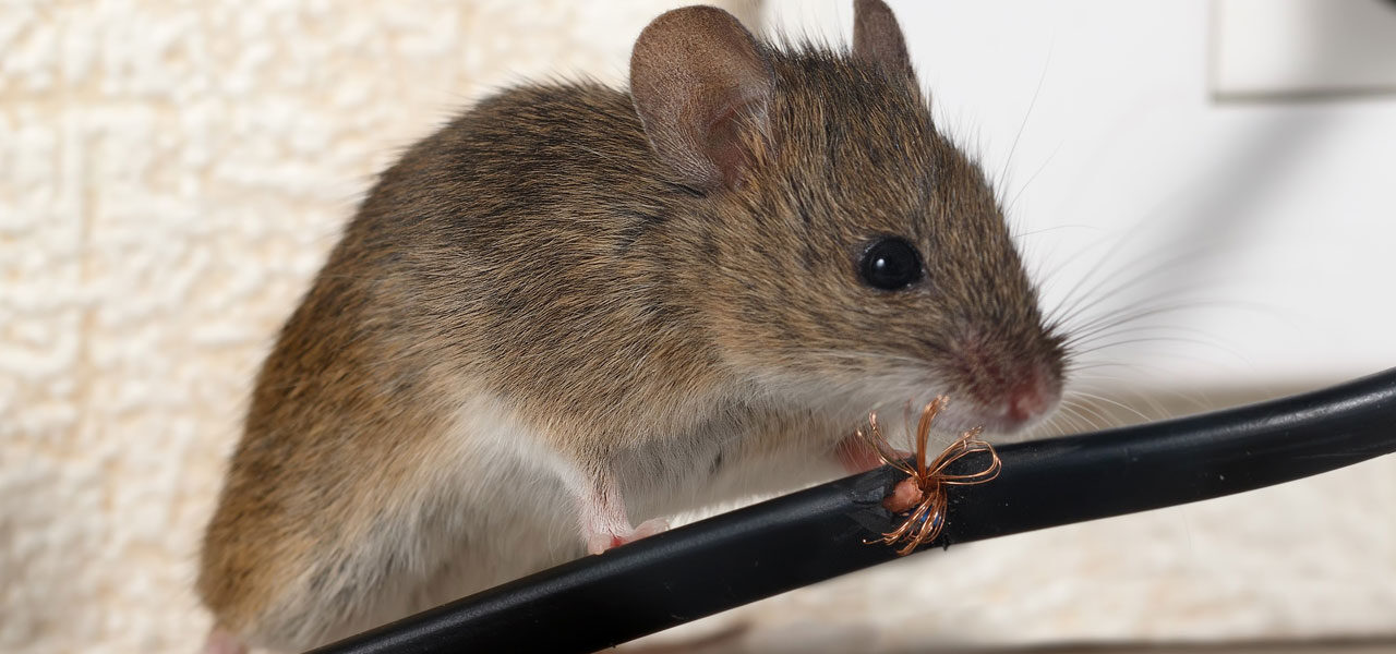 Pest Control Hampshire